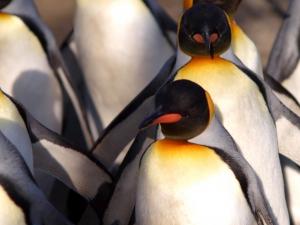 Summer Google Updates like Penguin 2